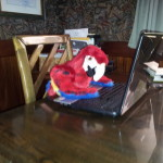 scarlet macaw puppet at a typewriter